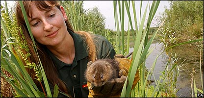 A water vole and Hazel Ryan from the Wildwood Trust