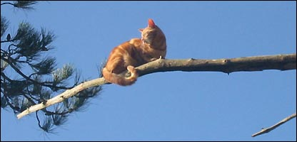 The cat up the tree