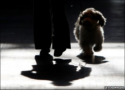 Silhouette of someone showing their dog at Crufts