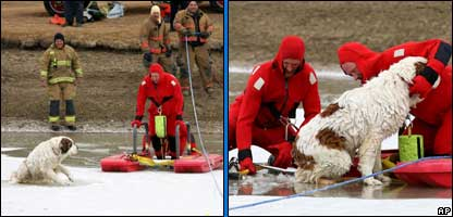 Duke being rescued from the ice (AP Photo/Billings Gazette, Casey Riffe)