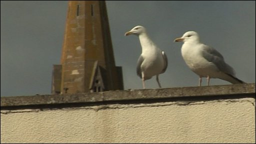 Seagulls on the school roof