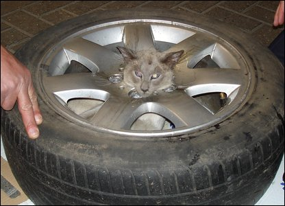 Caspar the cat got his head stuck in the centre of a tyre