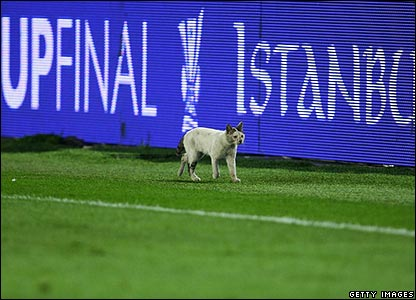 A cat at the Uefa Cup final
