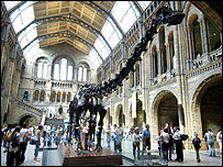 A diplodocus skeleton at the Natural History Museum