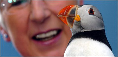 Muffin the Puffin Pic: Aberdeen Press and Journal