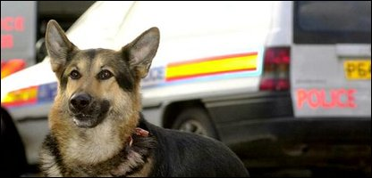 A police dog, not one of those that died