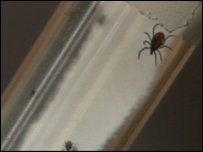 One of the tiny ticks that can carry lyme disease