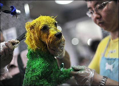 Dyed dogs in China
