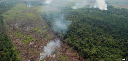 Rainforest destroyed in Sumatra