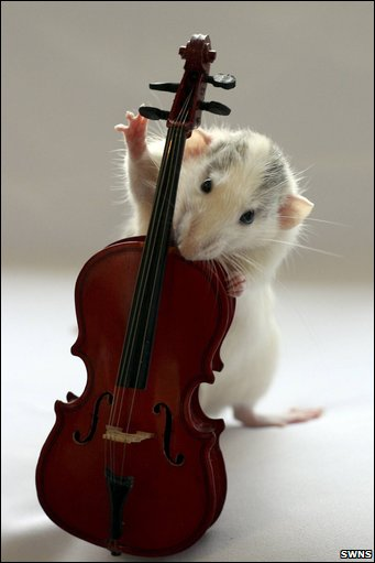 Rats Domino... rodent jazzes it up by pluking away on tehe double bass