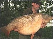 Benson the carp (pic courtesy Bluebell Lakes)