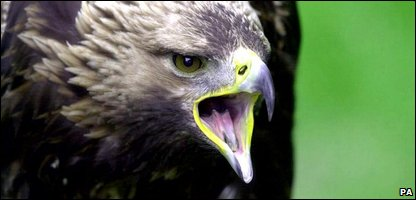 A golden eagle - but not the one that's died