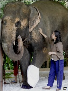 Motola the injured elephant