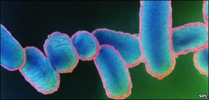 A coloured microscope shot of E.coli