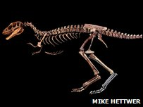 The Raptorex skeleton