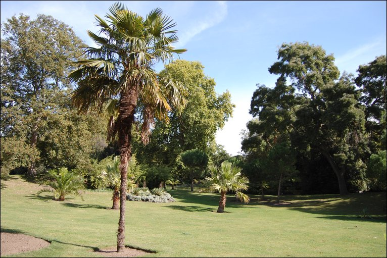 Bbc london in pictures sub tropical garden for Garden trees london