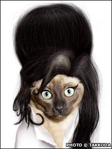 A cat dressed as Amy Winehouse