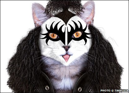 A cat dressed as someone from Kiss