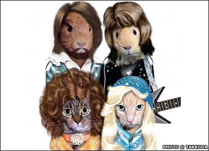Guinea pigs and cats as Abba