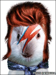A guinea pig dressed up as David Bowie