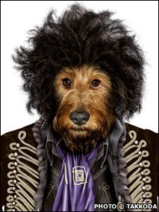 Dog dressed as Jimi Hendrix