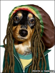 Dog with dreadlocks