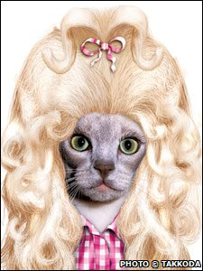 A cat dressed as Dolly Parton