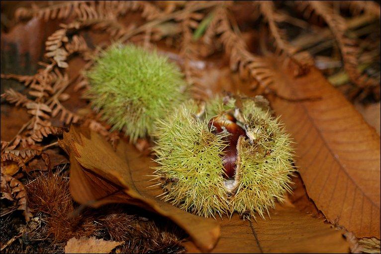 Bbc in pictures autumn berkshire