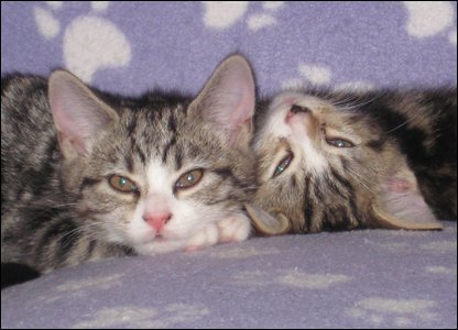 Maisie's kittens, Mildred and Monty