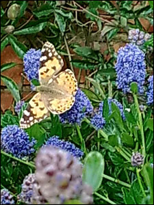 Alice's photo of a butterfly in her garden