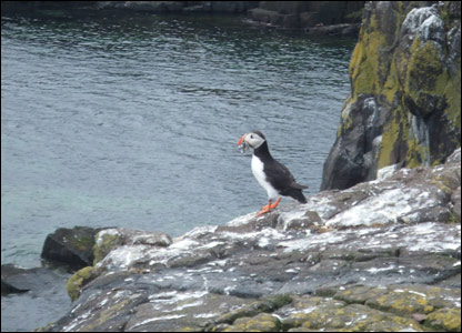 Fern's photo of a puffin