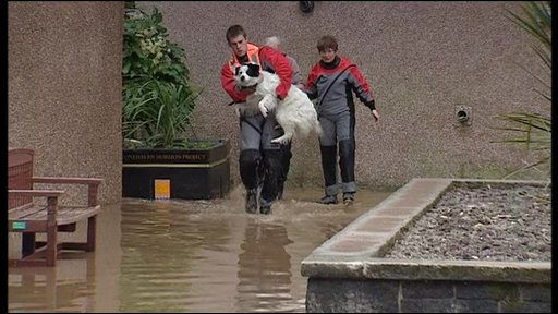 Rescuers help a dog to safety