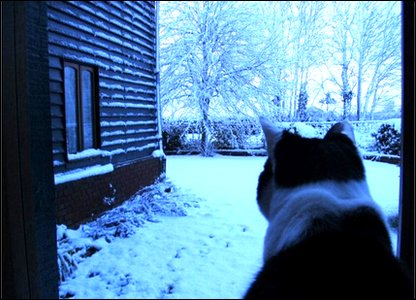 Cat and snow