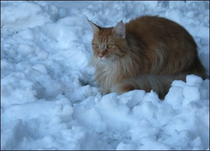 Leo the cat in the snow