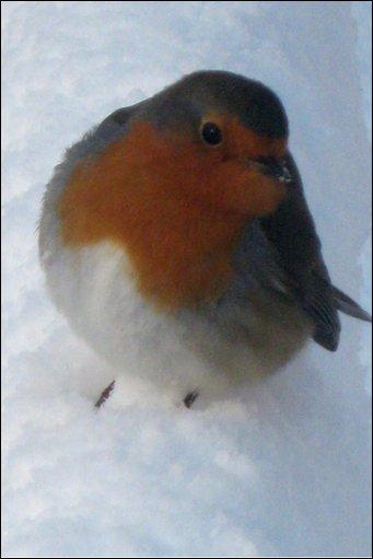 Bbc Your Winter Photos