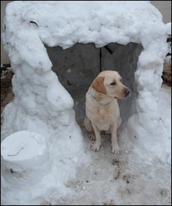 Dog in snow kennel