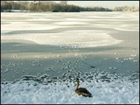 Bird on frozen lake in Berkshire
