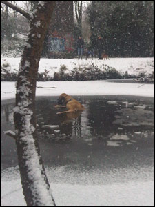 Hector in the freezing lake