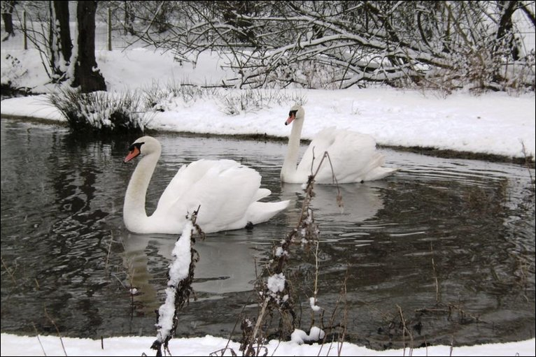 BBC - Photos of Herefordshire and Worcestershire in the snow