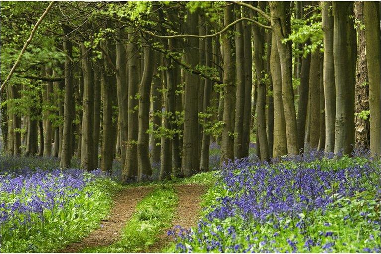 Image result for wytham woods