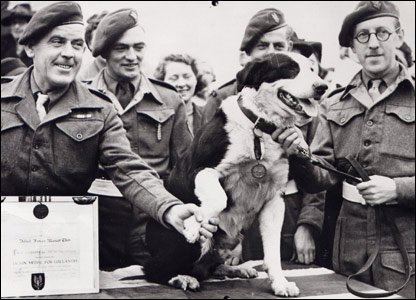 Rob the 'para' dog with his SAS regiment