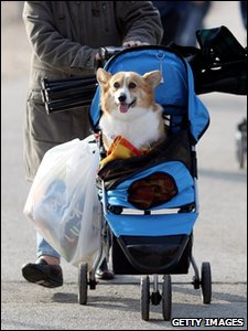 One dog taken to Crufts in a child's pushchair