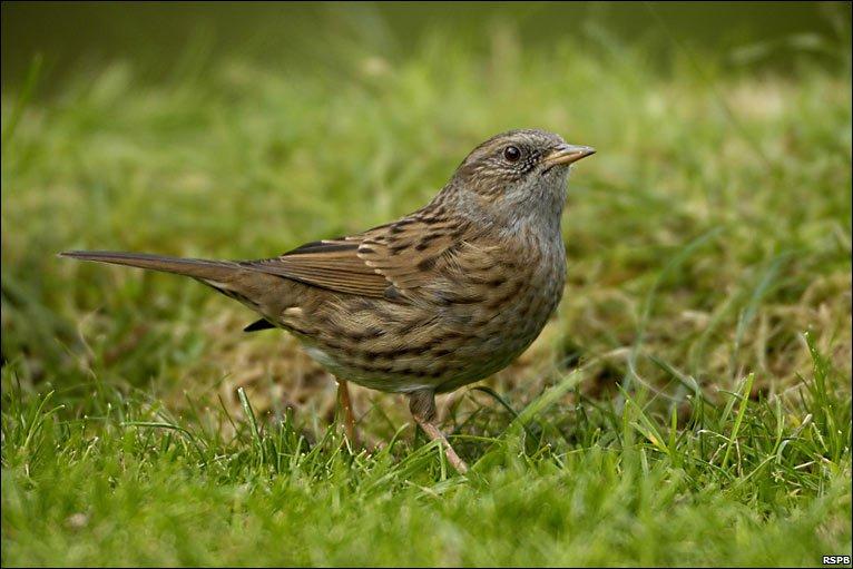 Common Garden Birds im...