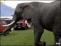 An elephant in a circus