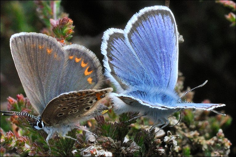Eyes are Male mating success female butterflies sperm