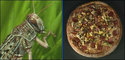 A locust and a pizza