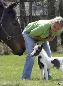 Pinto the foal with owner Dr Rachel Wagner