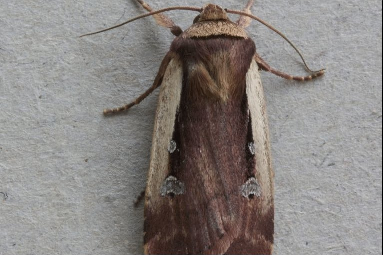 Bbc In Pictures Ceredigion S Moths