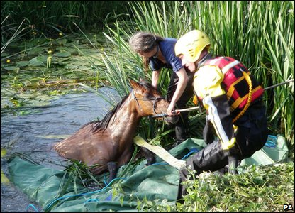 Fingel the horse being rescued from river