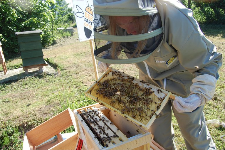 how to get bees to move into a hive